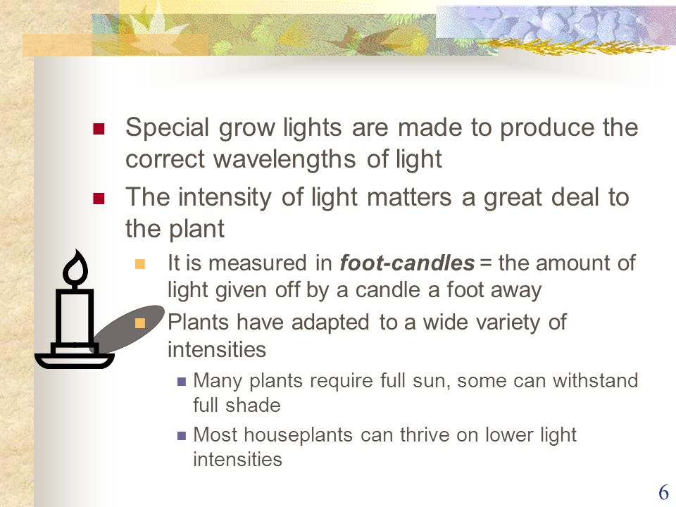 The intensity of light matters a great deal to the plant