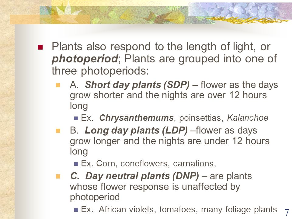 Plants also respond to the length of light, or photoperiod; Plants are grouped into one of three photoperiods: