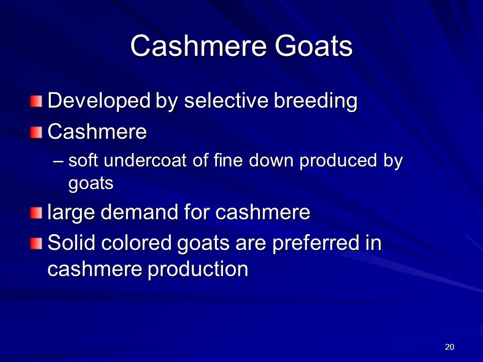 Cashmere Goats Developed by selective breeding Cashmere