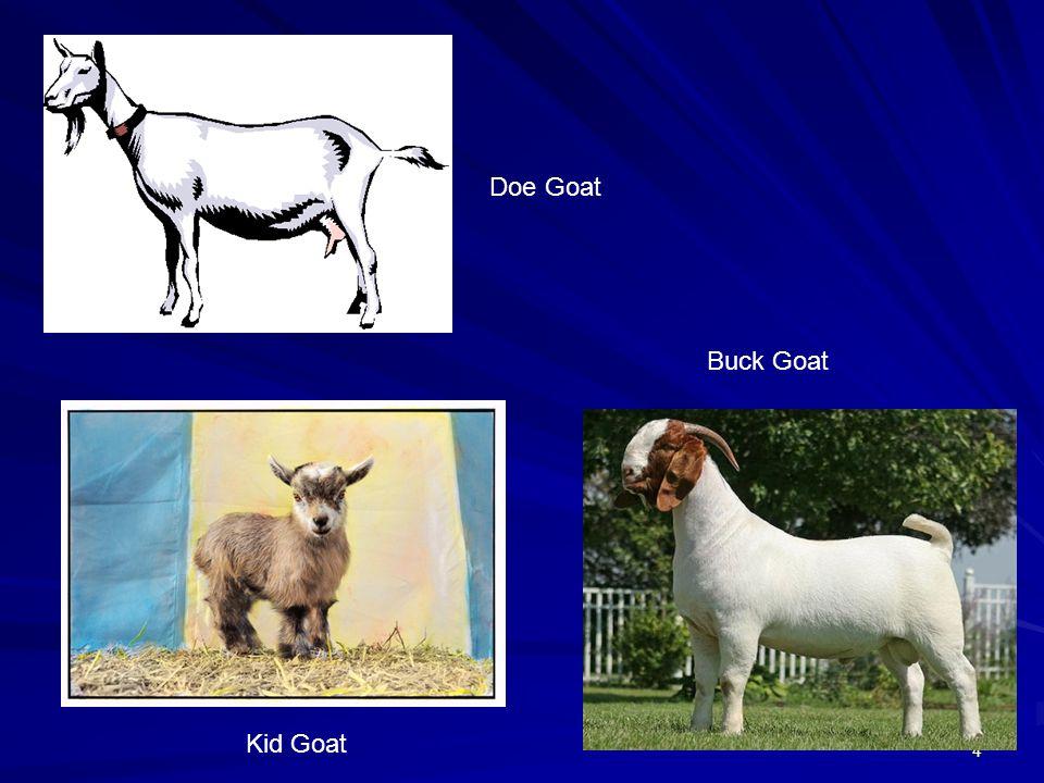 Doe Goat Buck Goat Kid Goat