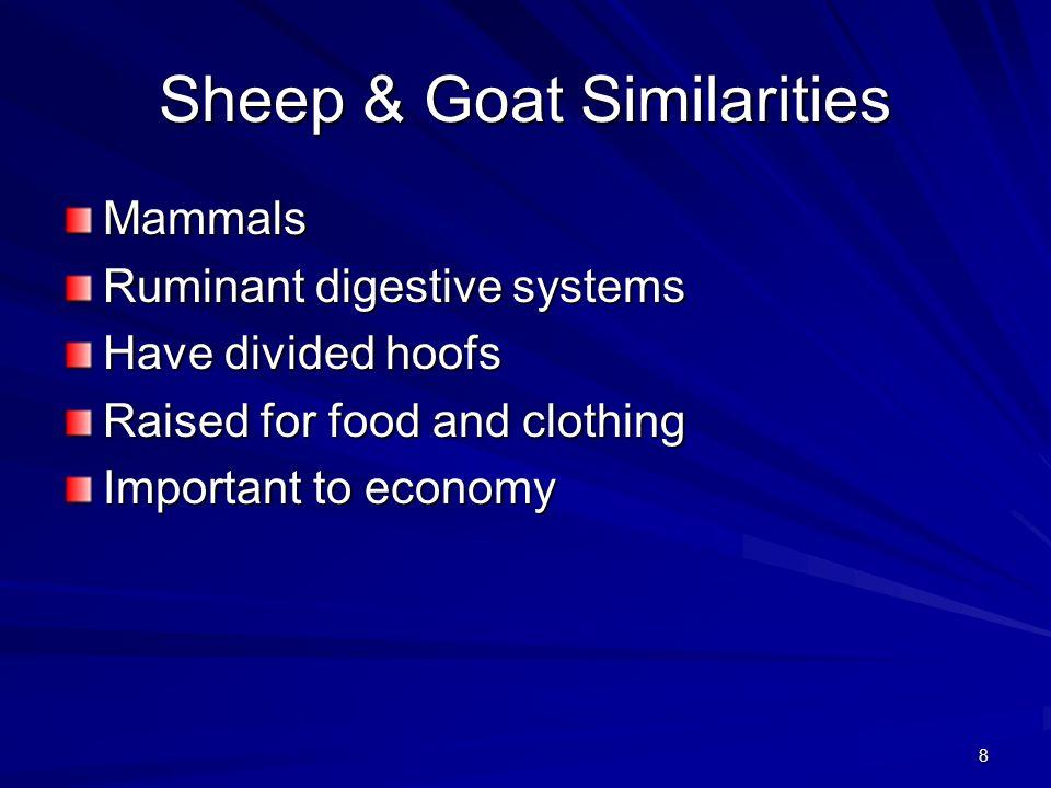 Sheep & Goat Similarities
