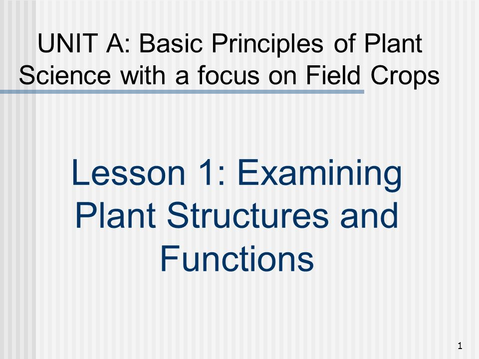 Lesson 1: Examining Plant Structures and Functions