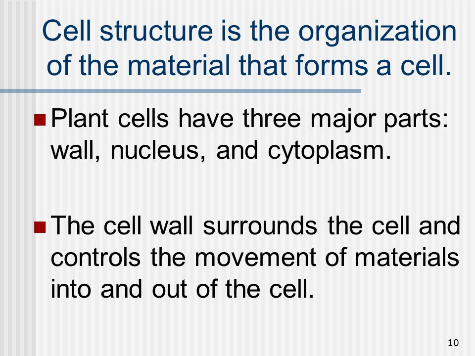 Cell structure is the organization of the material that forms a cell.