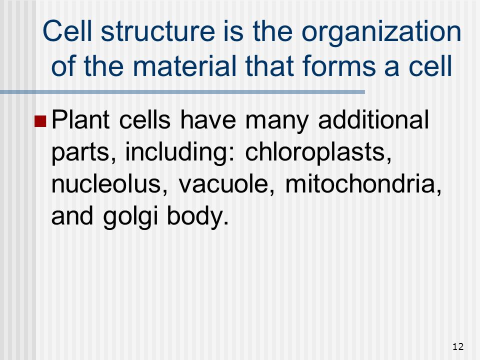 Cell structure is the organization of the material that forms a cell