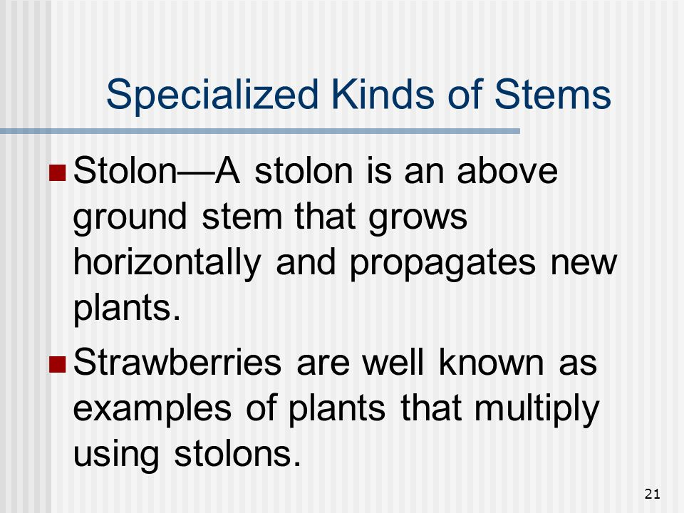 Specialized Kinds of Stems
