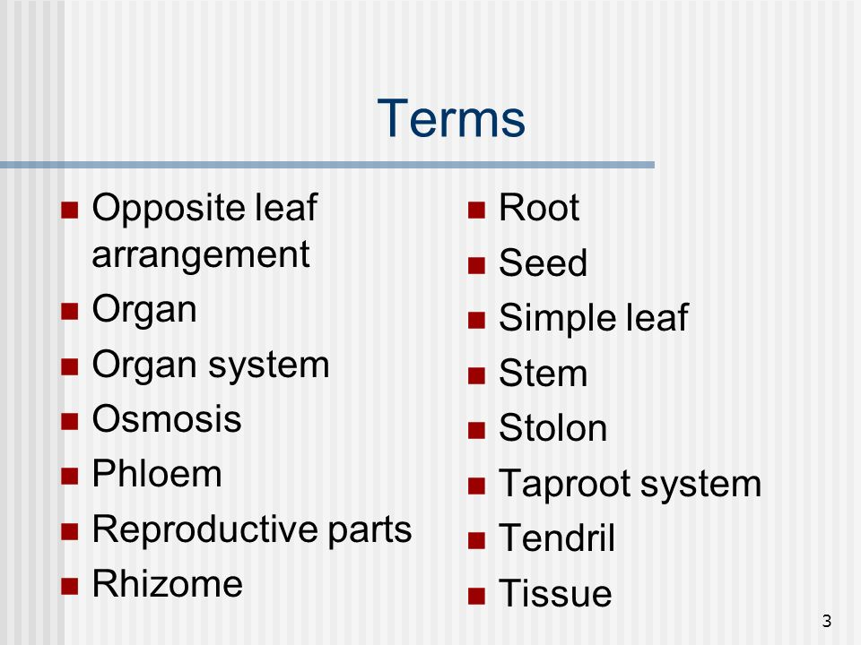 Terms Opposite leaf arrangement Organ Organ system Osmosis Phloem