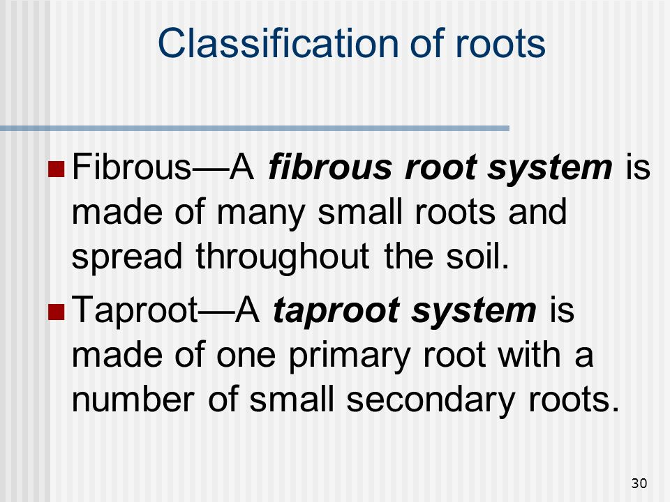 Classification of roots