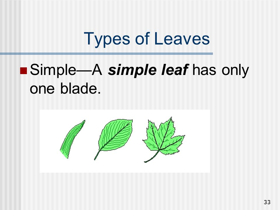 Types of Leaves Simple—A simple leaf has only one blade.