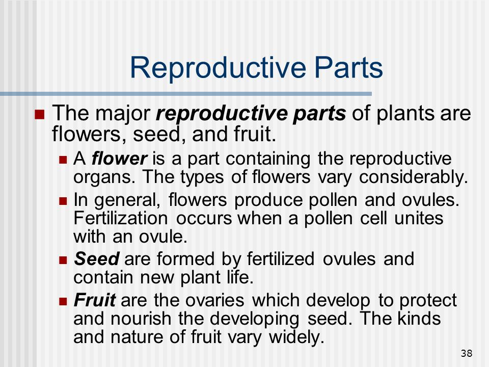 Reproductive Parts The major reproductive parts of plants are flowers, seed, and fruit.