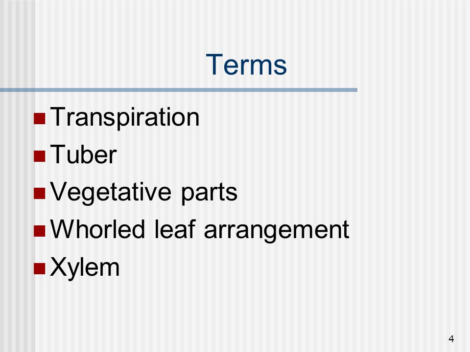 Terms Transpiration Tuber Vegetative parts Whorled leaf arrangement
