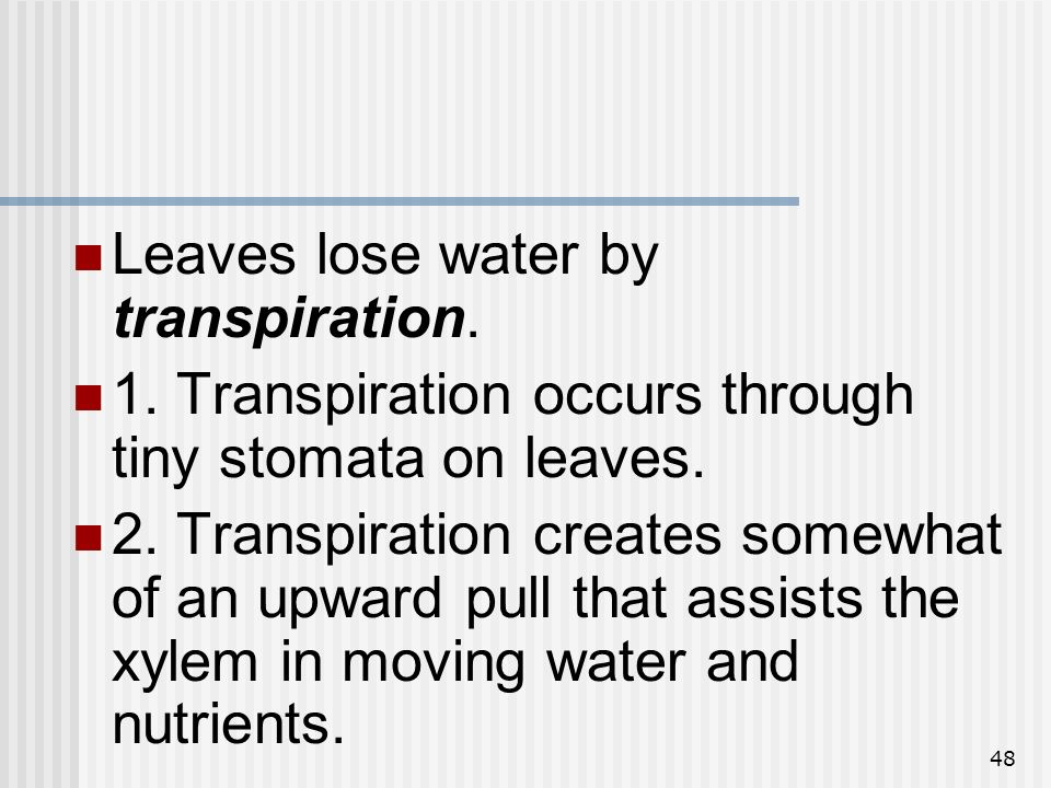Leaves lose water by transpiration.