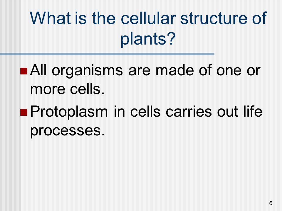 What is the cellular structure of plants