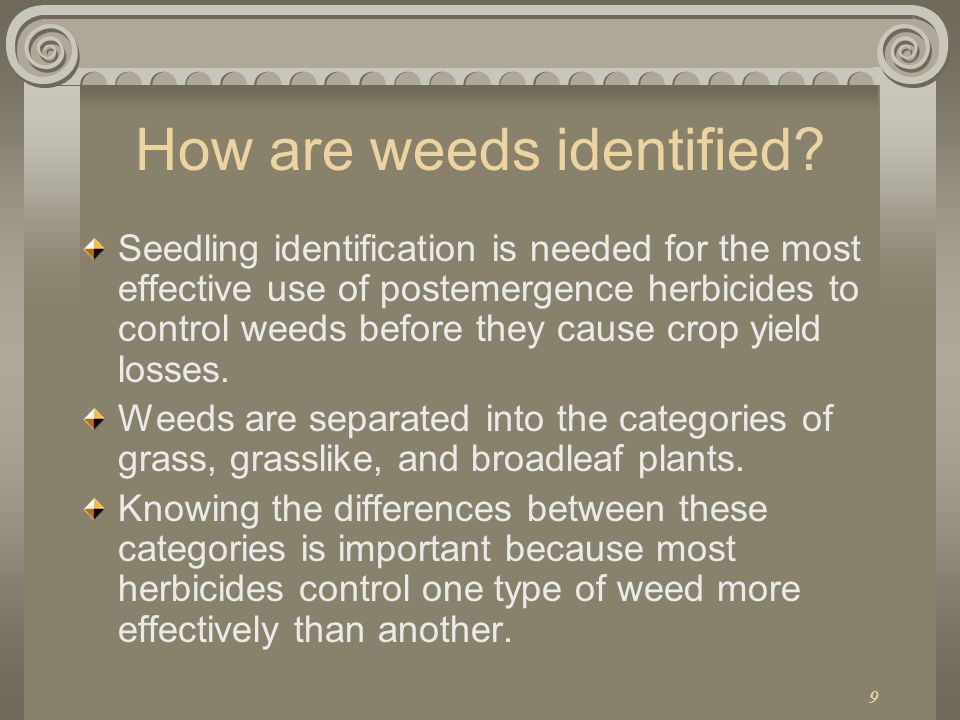 How are weeds identified