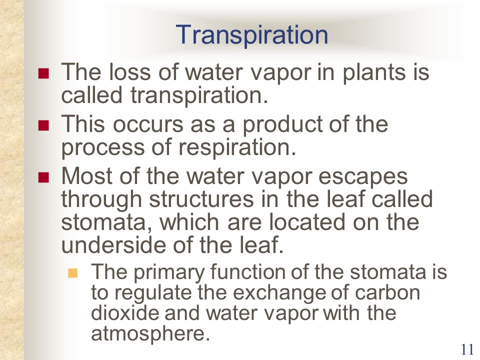Transpiration The loss of water vapor in plants is called transpiration. This occurs as a product of the process of respiration.