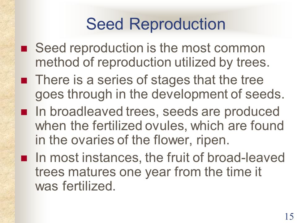 Seed Reproduction Seed reproduction is the most common method of reproduction utilized by trees.