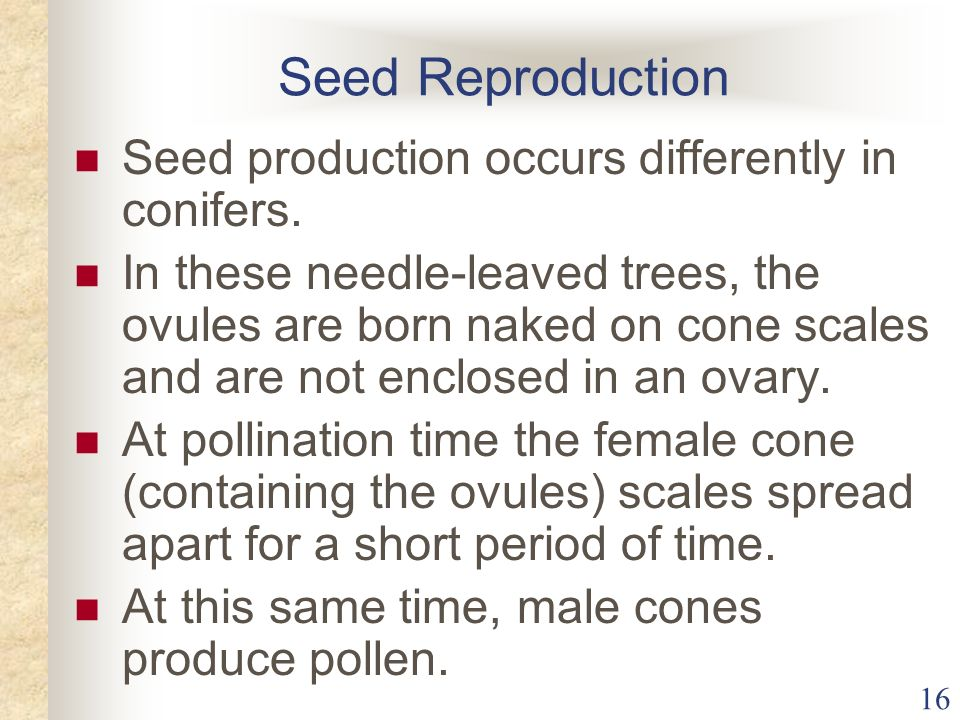 Seed Reproduction Seed production occurs differently in conifers.
