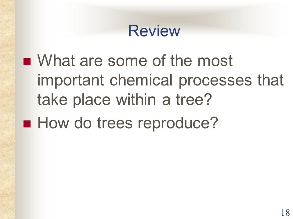 Review What are some of the most important chemical processes that take place within a tree.
