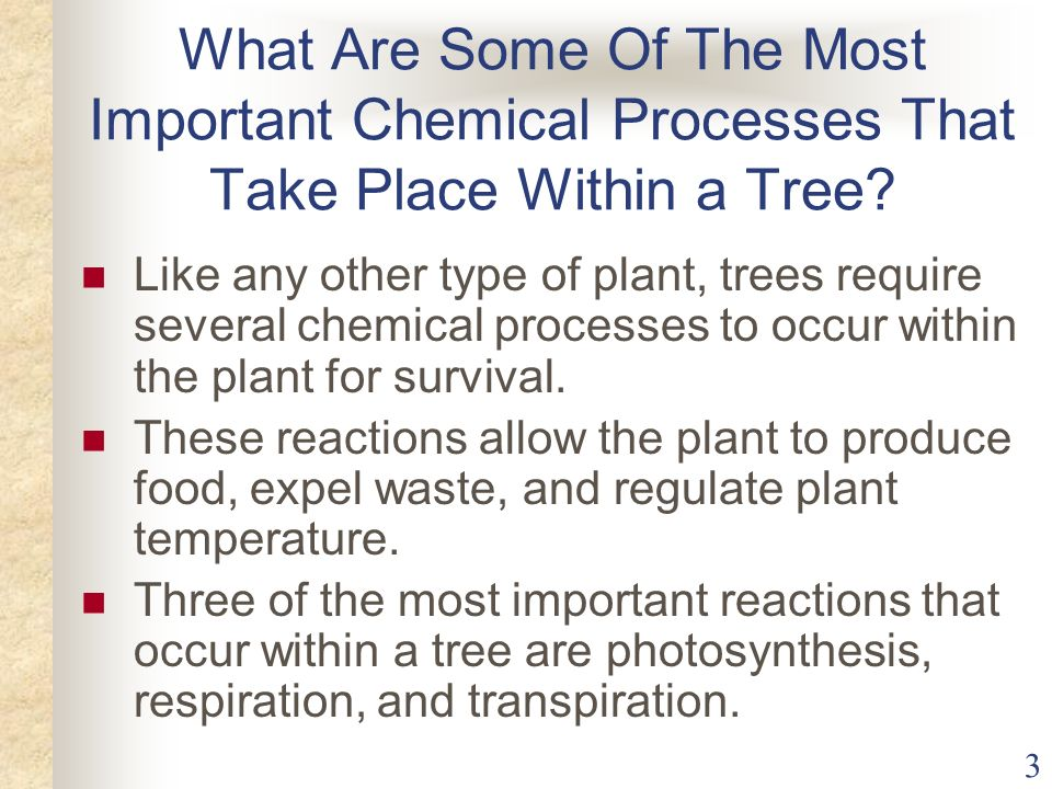 What Are Some Of The Most Important Chemical Processes That Take Place Within a Tree
