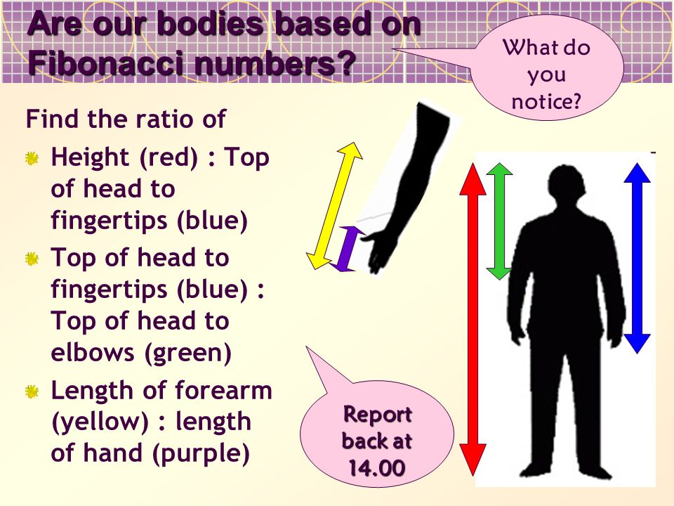 Are our bodies based on Fibonacci numbers