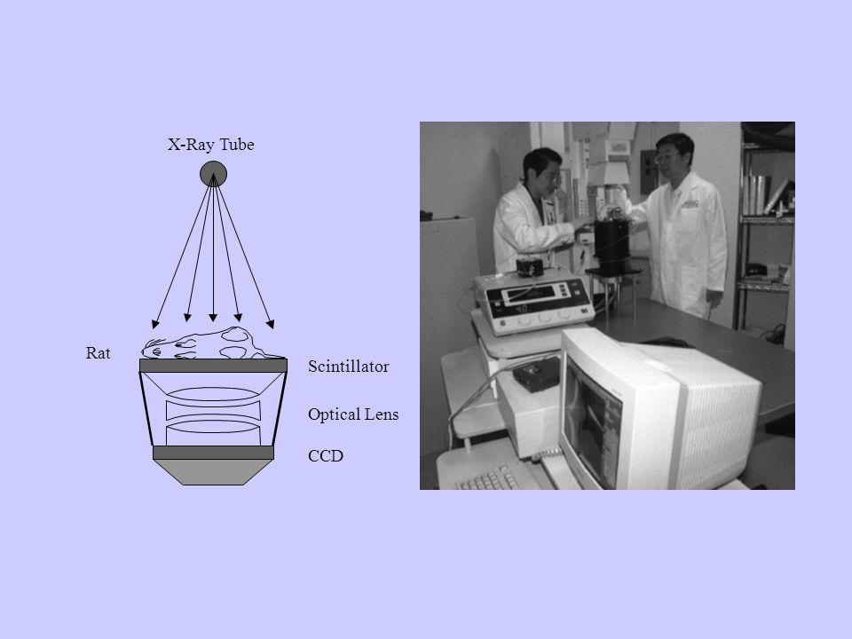 Scintillator CCD Optical Lens Rat X-Ray Tube