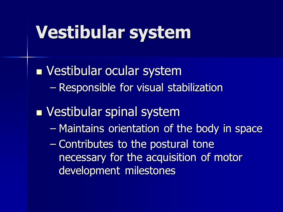 Vestibular system Vestibular ocular system Vestibular spinal system