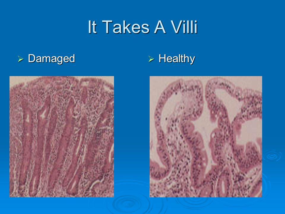 It Takes A Villi Damaged Healthy