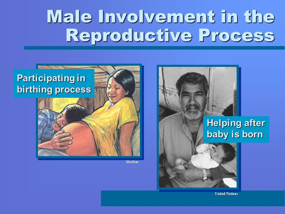 Male Involvement in the Reproductive Process