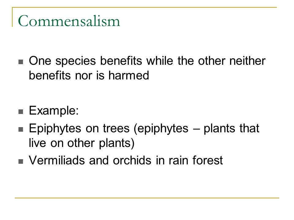 Commensalism One species benefits while the other neither benefits nor is harmed. Example: