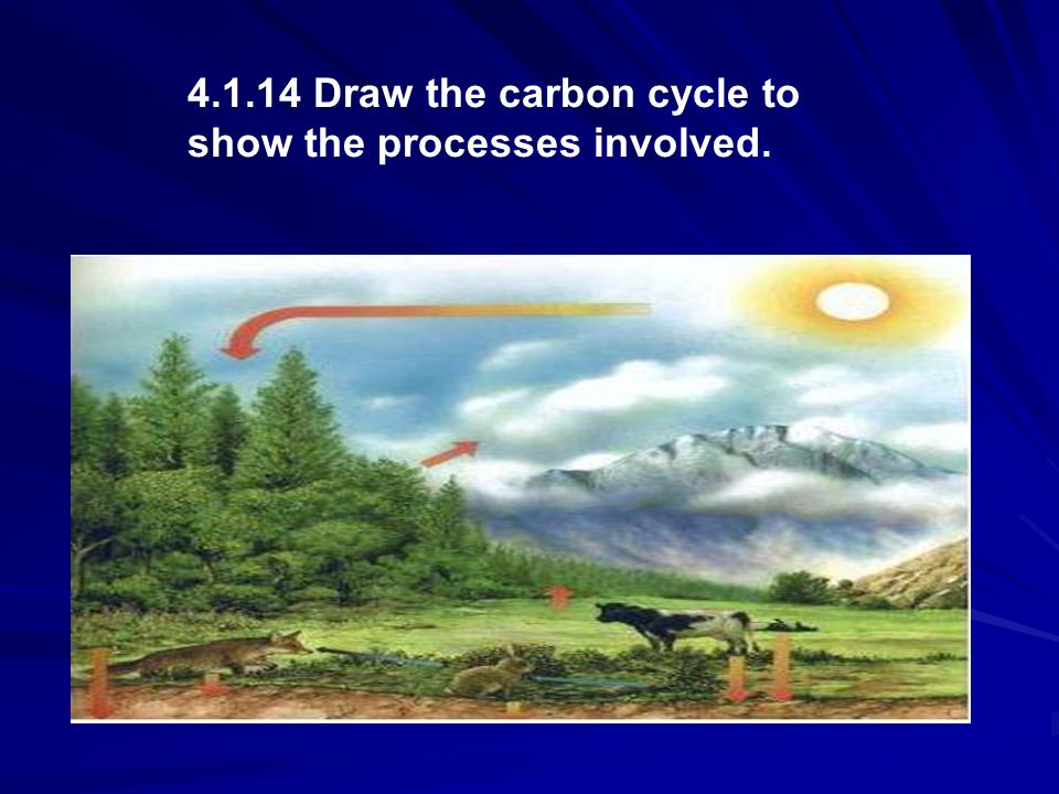 4.1.14 Draw the carbon cycle to