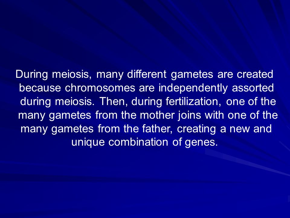 During meiosis, many different gametes are created