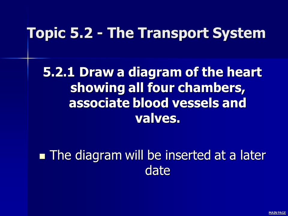 Topic 5.2 - The Transport System