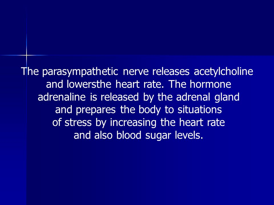The parasympathetic nerve releases acetylcholine