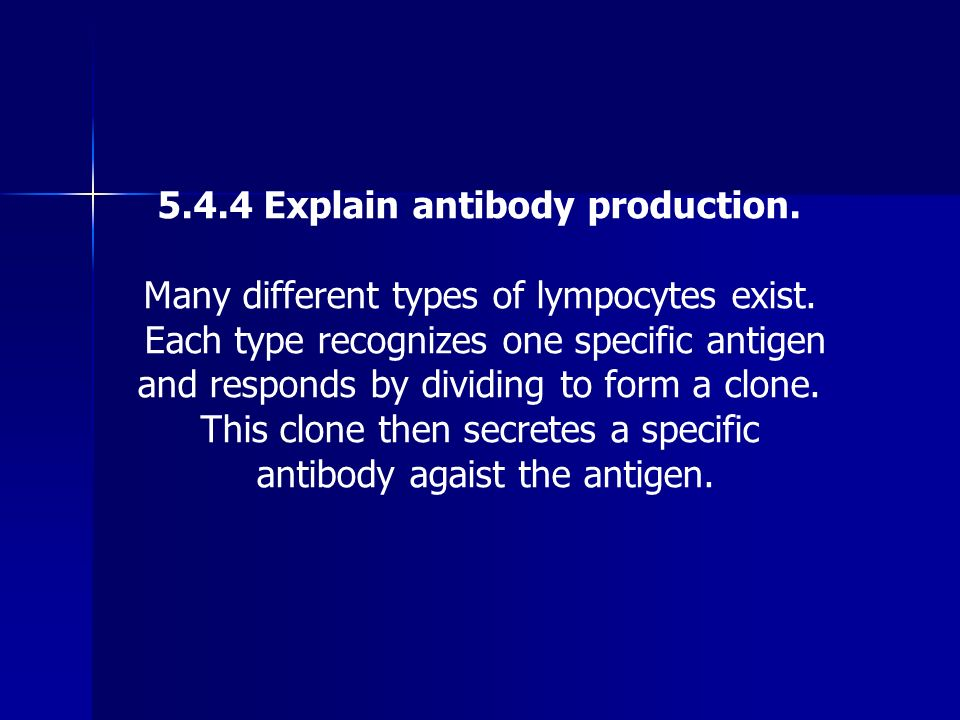 5.4.4 Explain antibody production.