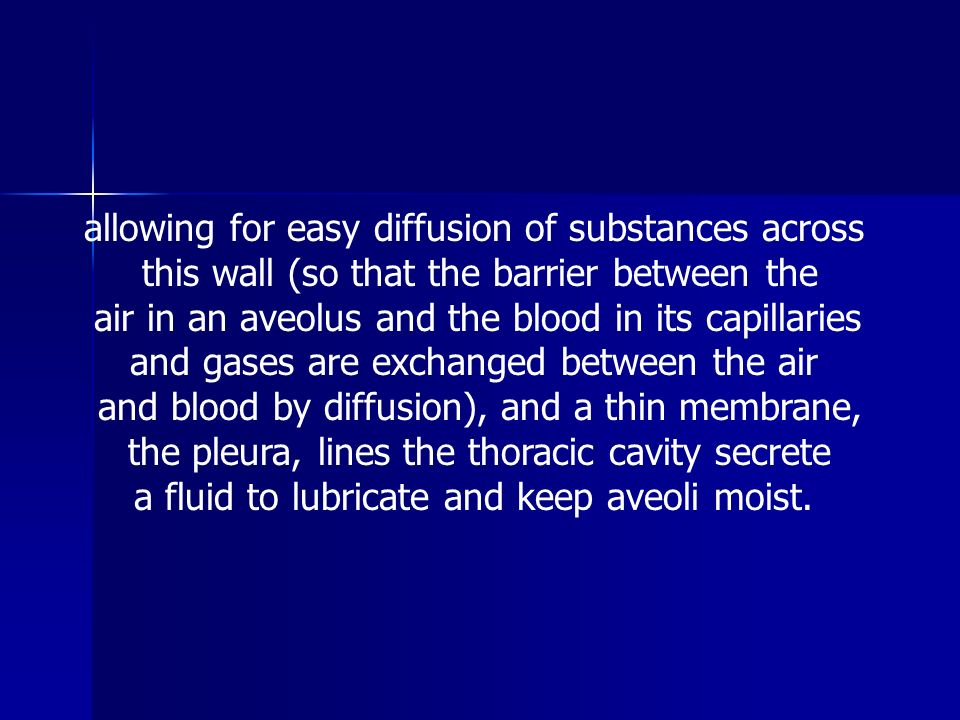allowing for easy diffusion of substances across