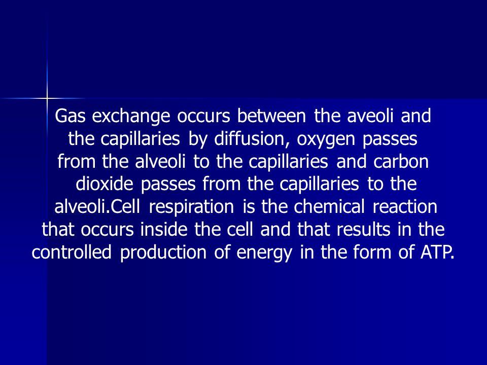 Gas exchange occurs between the aveoli and