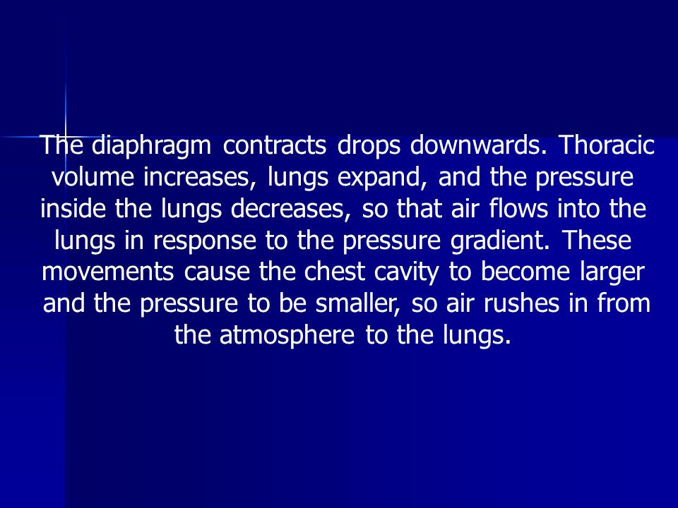 The diaphragm contracts drops downwards. Thoracic
