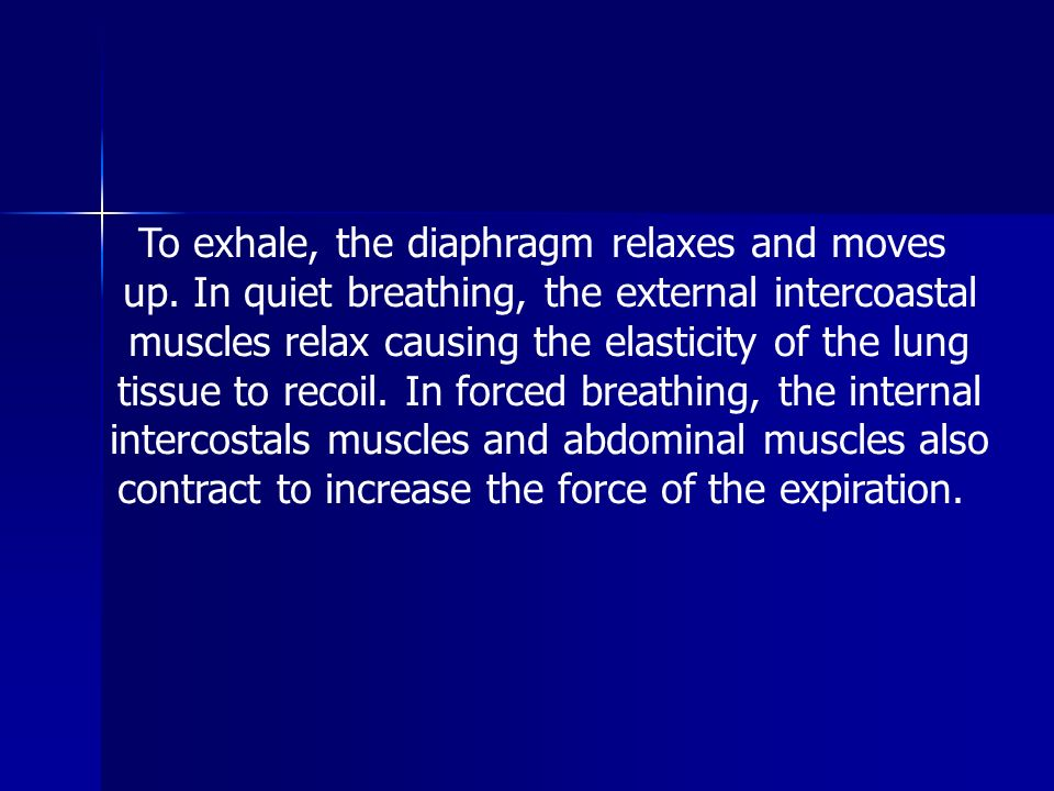 To exhale, the diaphragm relaxes and moves