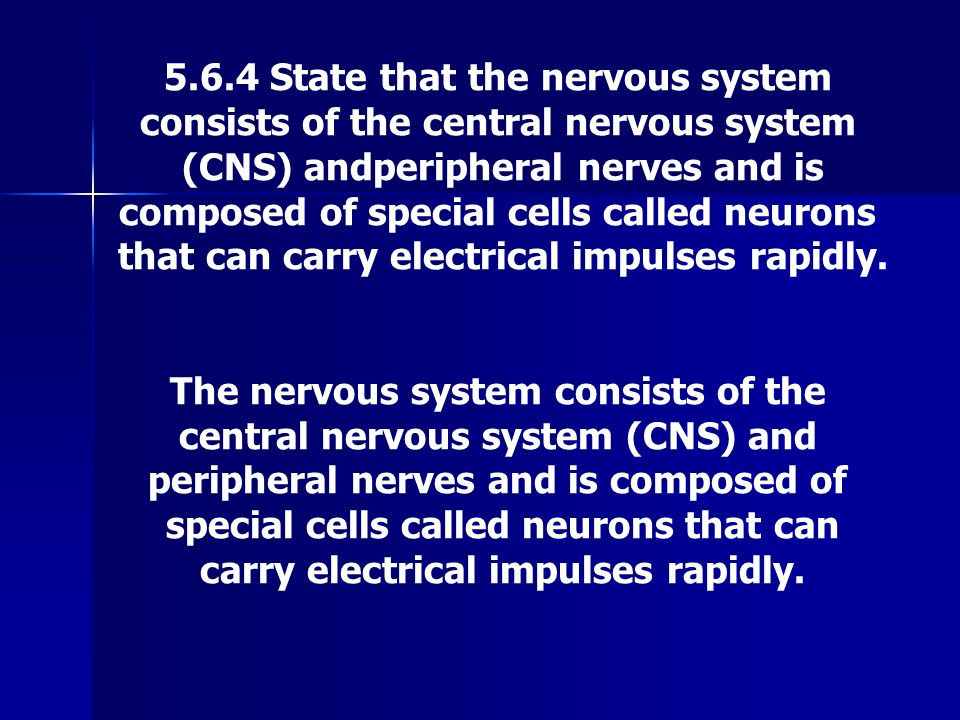 5.6.4 State that the nervous system