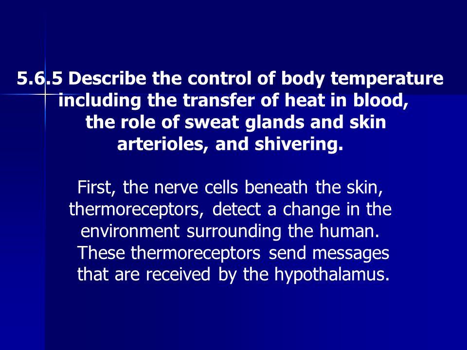 5.6.5 Describe the control of body temperature