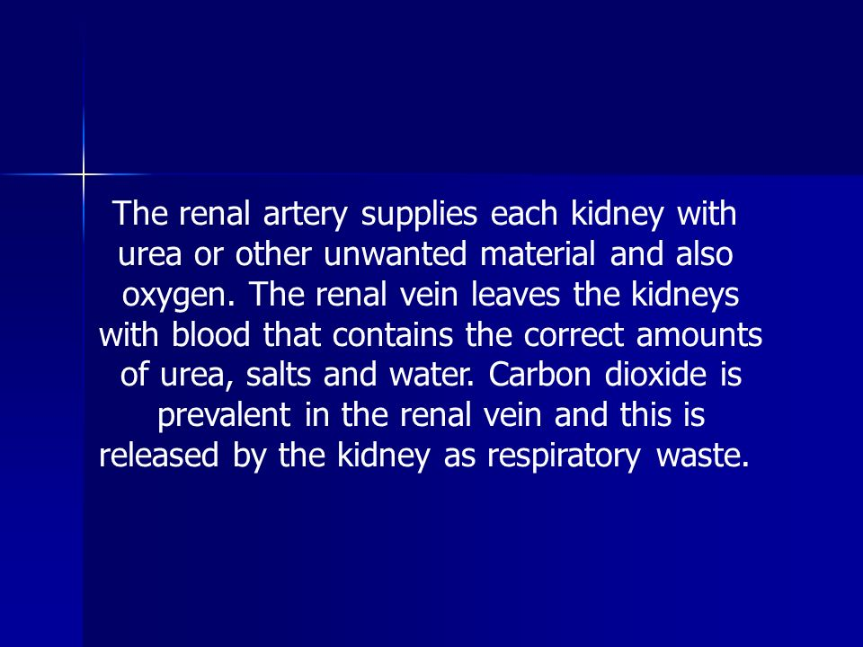 The renal artery supplies each kidney with