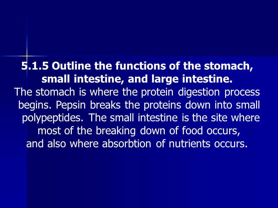 5.1.5 Outline the functions of the stomach,
