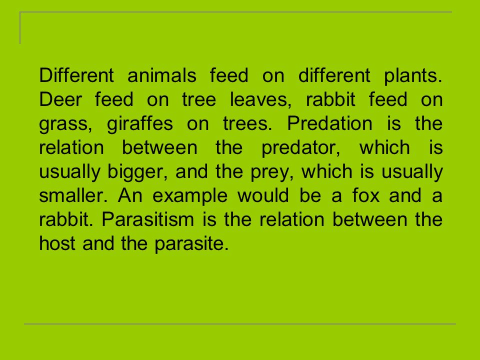 Different animals feed on different plants