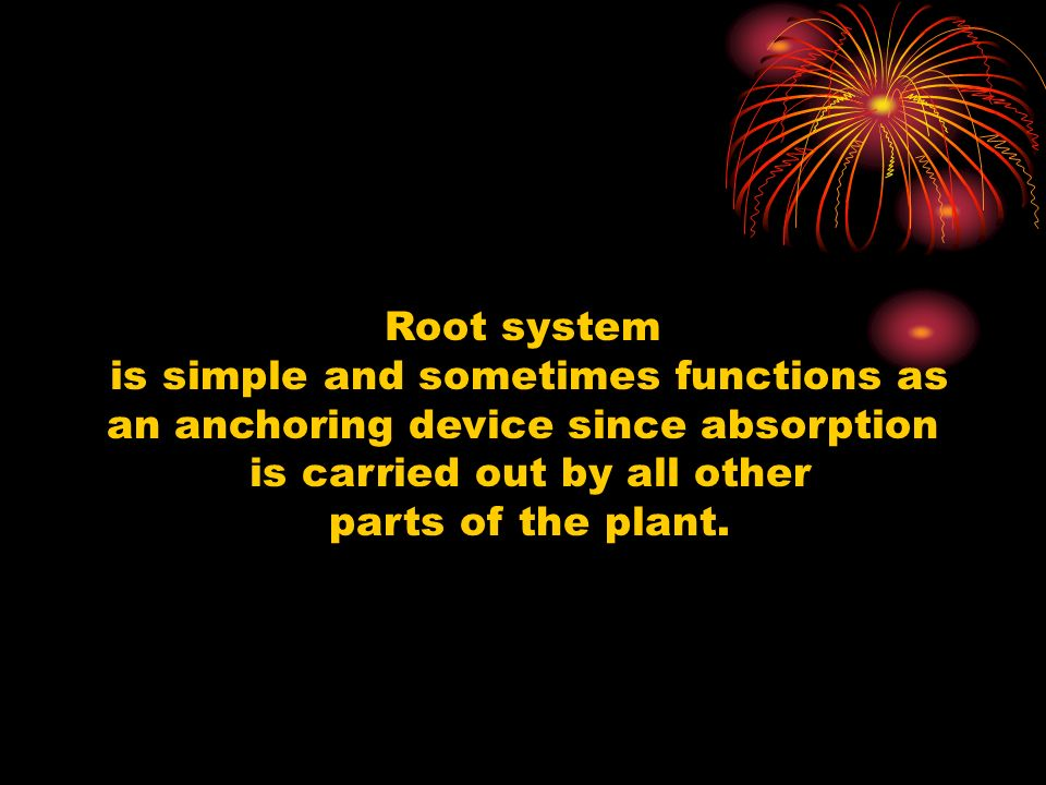 is simple and sometimes functions as