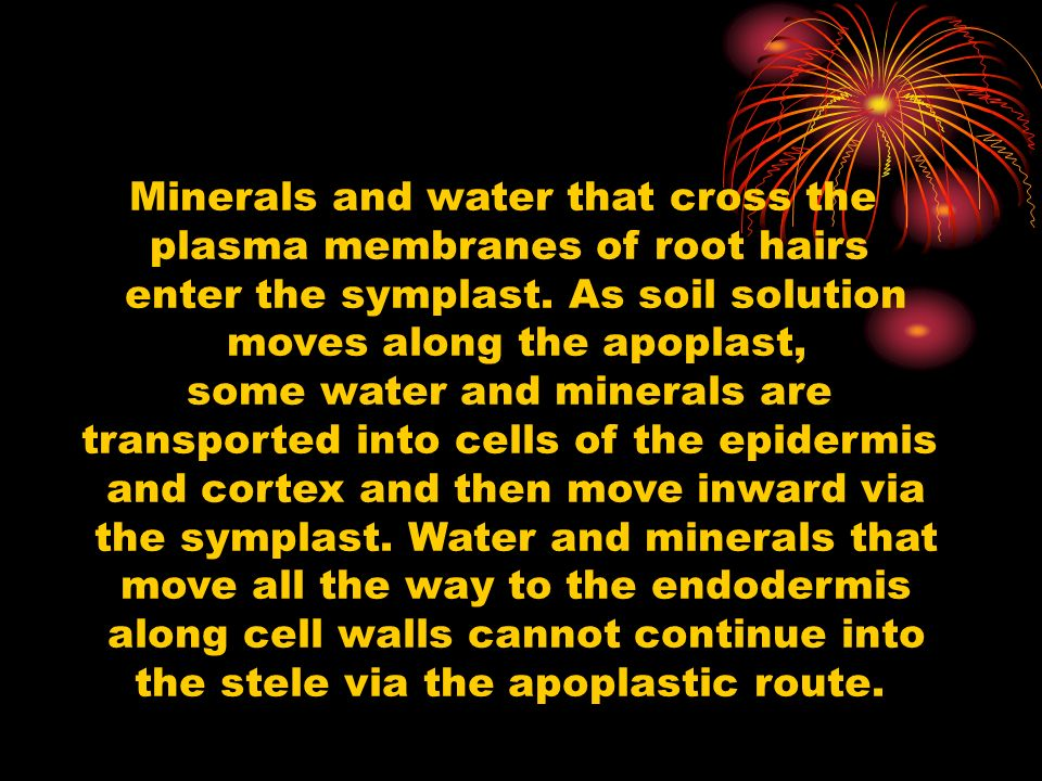 Minerals and water that cross the plasma membranes of root hairs