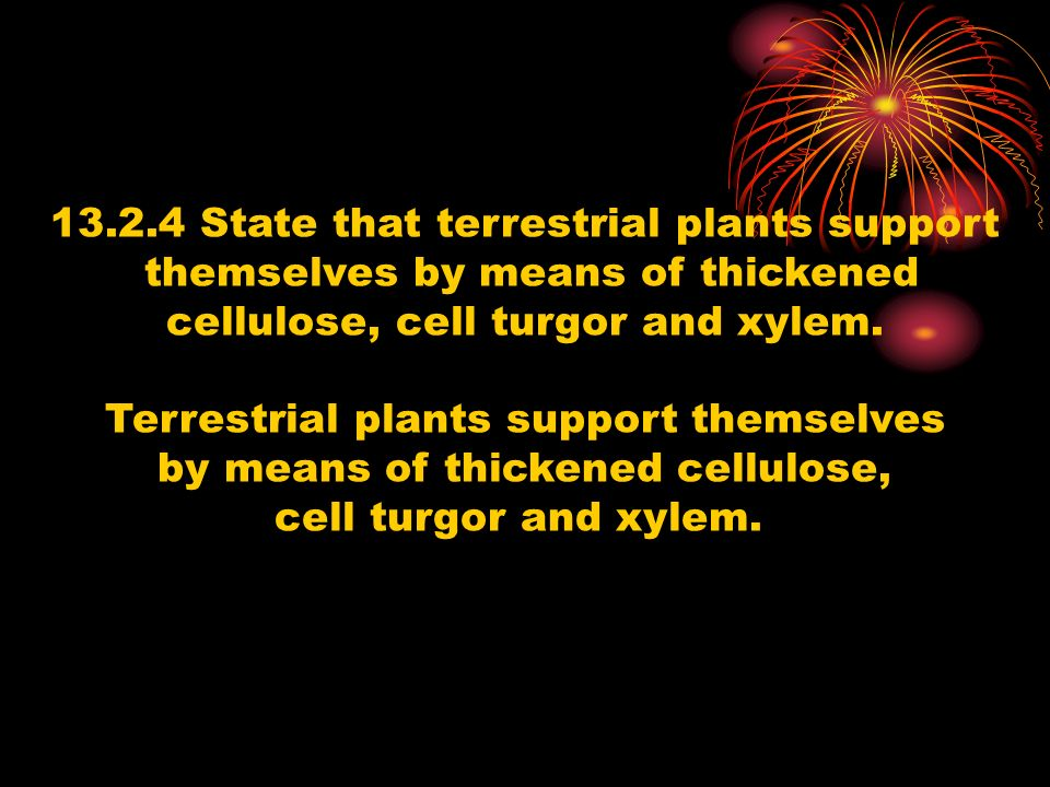 13.2.4 State that terrestrial plants support