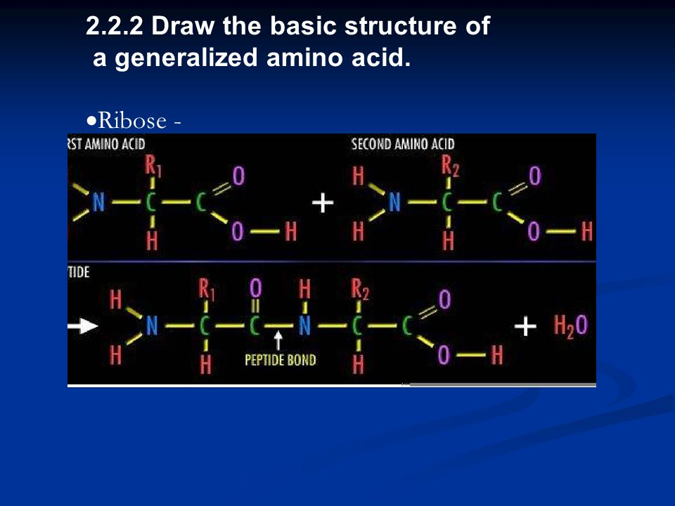 2.2.2 Draw the basic structure of