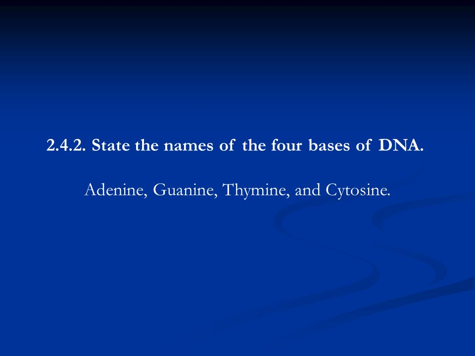 State the names of the four bases of DNA.