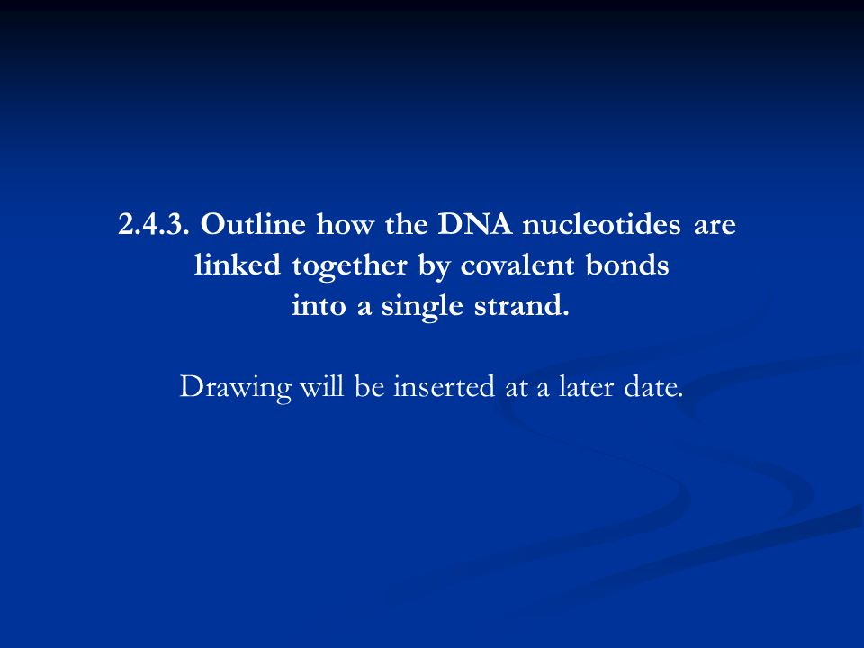 2.4.3. Outline how the DNA nucleotides are