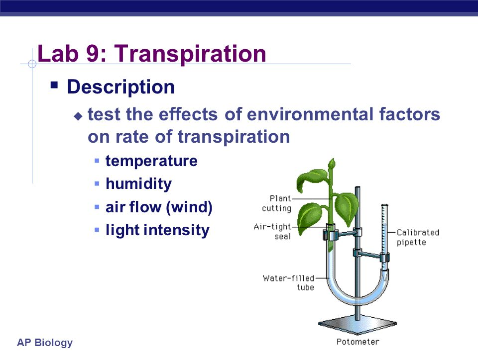 Lab 9: Transpiration Description