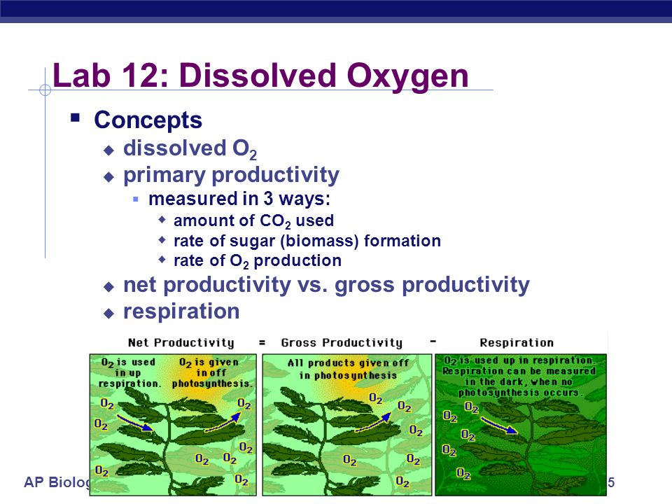 Lab 12: Dissolved Oxygen Concepts dissolved O2 primary productivity